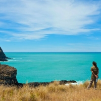 new zealand nature safari - shore excursions group
